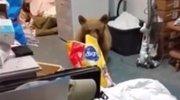呆萌!终于逮住偷狗粮的熊了