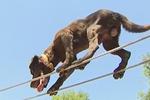 小身躯蕴含大能量 搜救犬绝技惊人