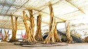 北京首家古森林博物馆