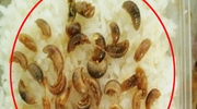 长沙网友在订餐平台点一碗河虾 吃出38条水虫