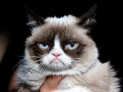 猫减肥励志头像