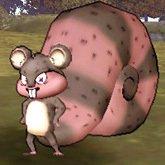 红光松鼠.jpg