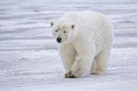 北极熊第五蜘蛛传闻人格图片