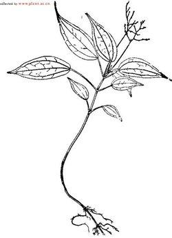 手绘白色钟形花