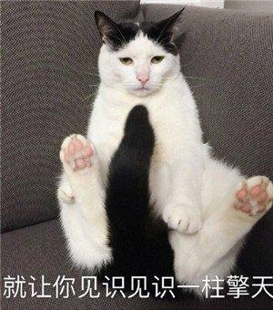 猫咪撒娇表情包9.jpg