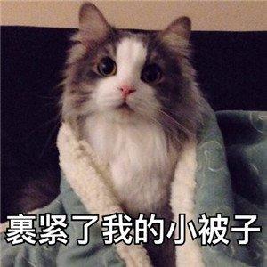 猫咪撒娇表情包1.jpg
