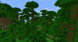 Jungle O' Trees.jpg