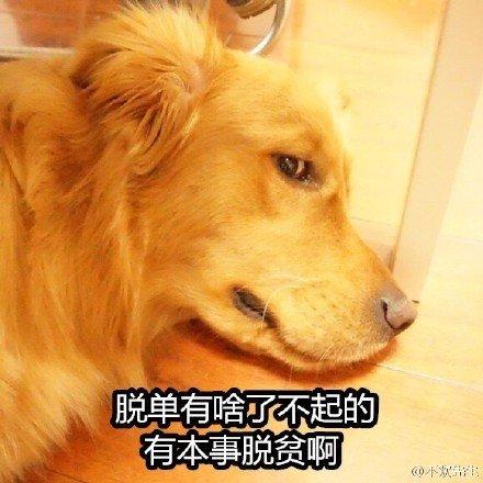 单身狗5.jpg
