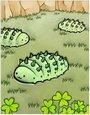 绿棉虫卡片