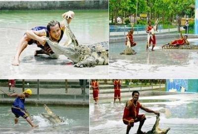 广州长隆野生动物园(鳄鱼公园套票)