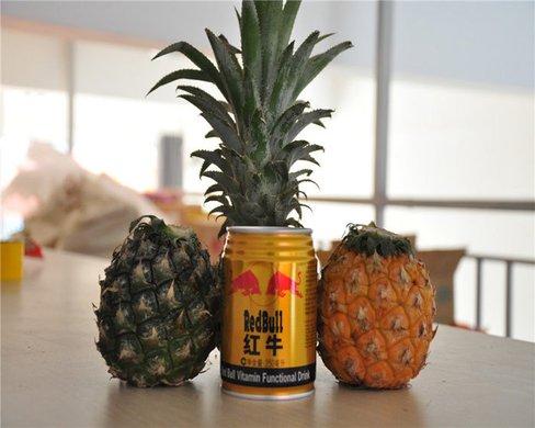 泰国小菠萝 - 菠萝图片大全大图 - 菠萝炒饭