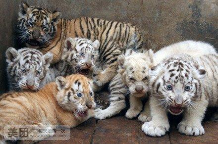 济南跑马岭野生动物园世界3张