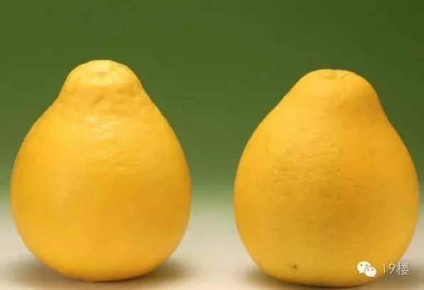 秋天吃柚子原来有这么多好处:5点挑到好吃柚 - 一统江山 - 一统江山的博客