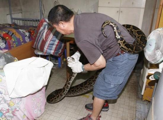 4.5米长巨蠎闯入民宅 抓捕人士与其上演人蛇大战 -  - 真光 的博客
