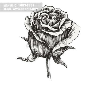 素描玫瑰花的图片