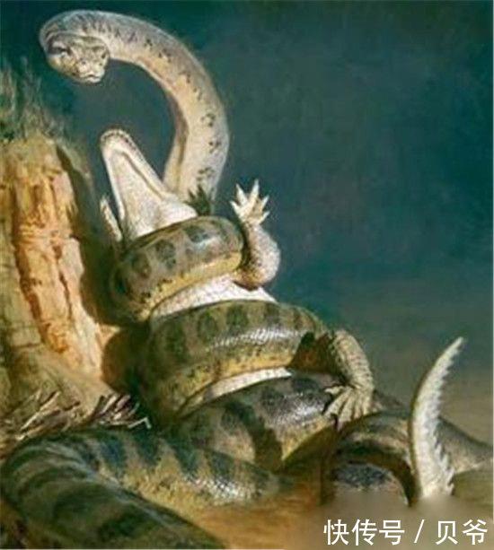 世界上最大的蛇泰坦蟒再现 比亚马逊森蚺大多了