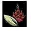 火龙果种子.png
