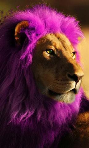 狮子壁纸_360手机助手