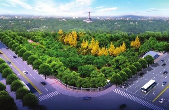 阔叶型树木手绘平面