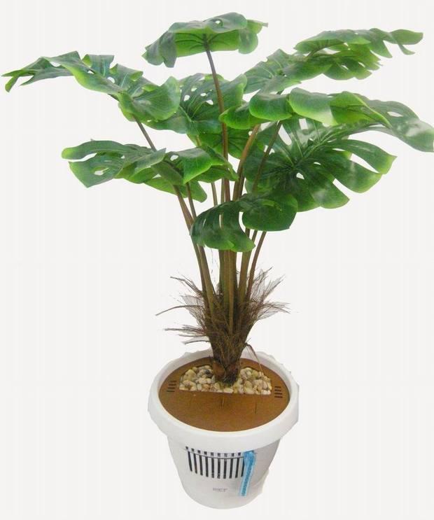请问这种大叶子的盆栽叫什么
