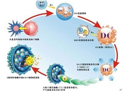 生物细胞免疫治疗和DC CIK细胞免疫疗法是一样的吗