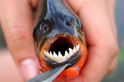 吃鱼避开这两个部位 重金属含量惊人 - 浪花皇子 - 浪花皇子