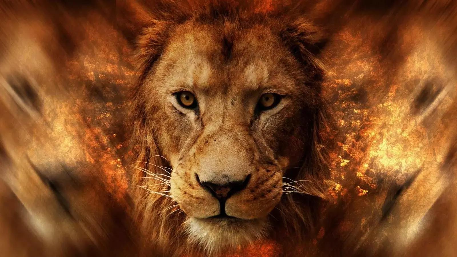 可爱的狮子壁纸