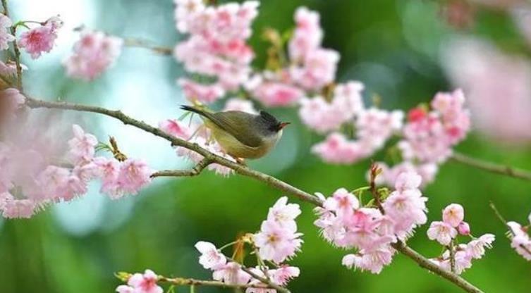 """剪纸图解教程:面朝窗外,春暖花开,剪""""春""""字,迎美好春光"""