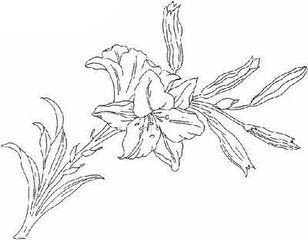 怎样用粉笔画百合花