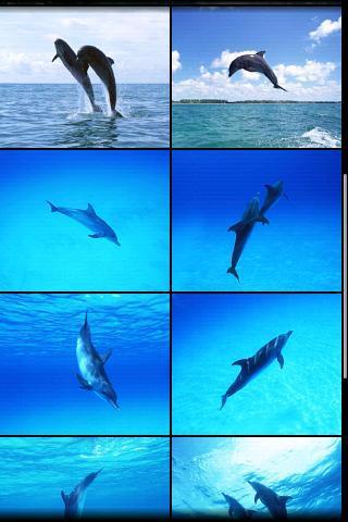 可爱海豚手机壁纸; 蔚蓝的海面上,波光粼粼,娇憨可爱的海豚们如精灵般