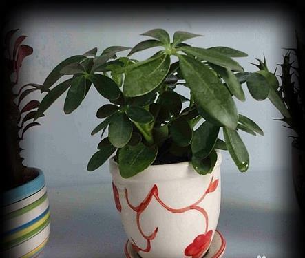 22种最会吸毒的植物,你家刚好需要!