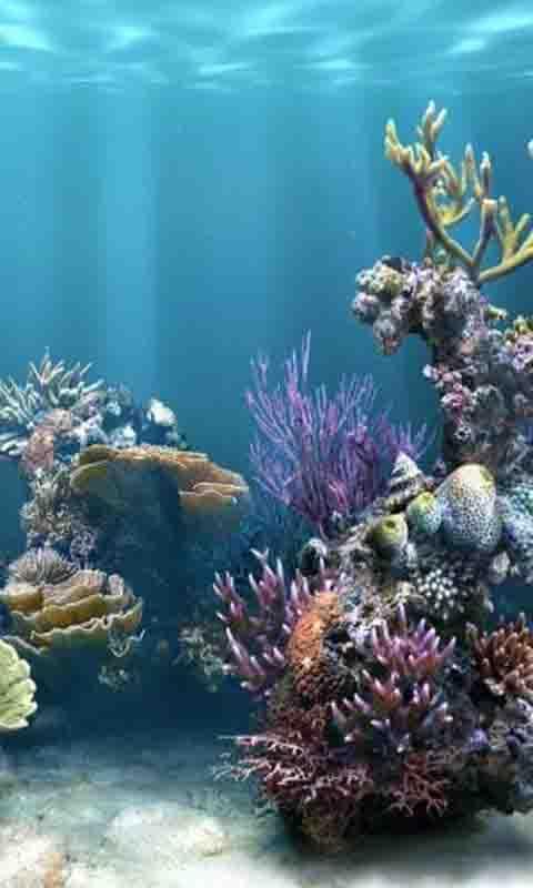 安卓市场 软件 壁纸主题 3d海洋世界动态壁纸
