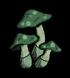 绿蘑菇.png