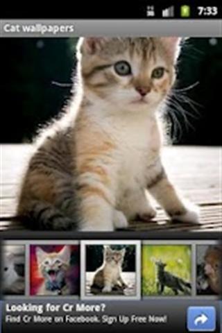 可爱猫咪主题壁纸