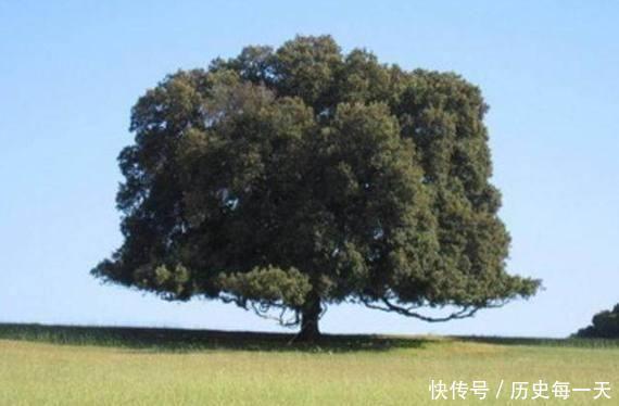 心理测试有4棵树,哪棵年龄最大测你老了靠什么养自己