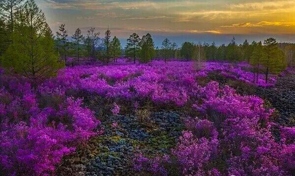 有北山国家森林公园,万亩种子林,映山红滑雪场,寒温带植物园,资源馆