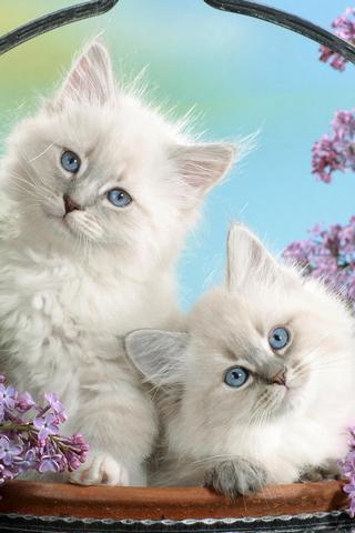 可爱猫链接游戏_360手机助手