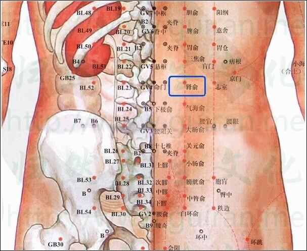 肾腧穴位在人体的什么部位