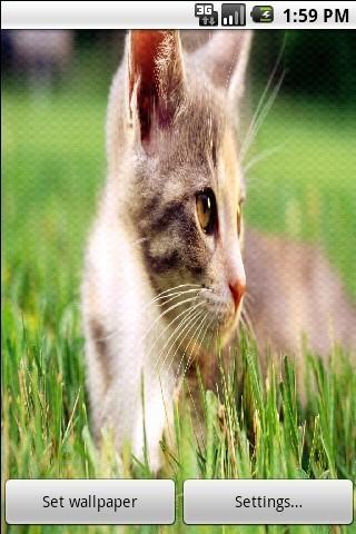可爱猫猫动态壁纸