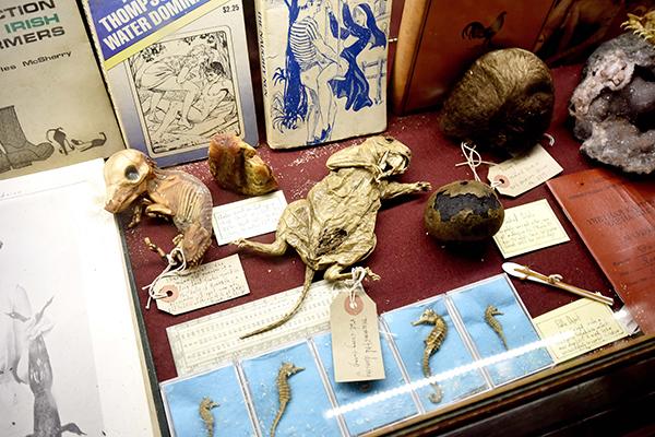 猎奇博物馆:收藏名人排泄物 闻一次7.9美元 - 钟儿丫 - 响铃垭人