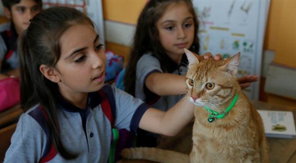 """""""教室猫""""与小学生一同返校上课"""