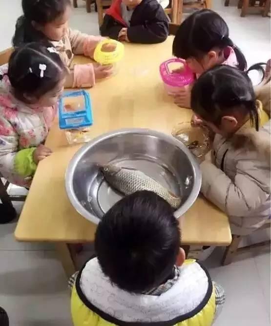 【转】北京时间    幼儿园老师让带肉肉植物 结果萌娃带了块猪肉 - 妙康居士 - 妙康居士~晴樵雪读的博客