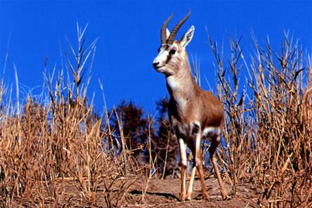 内蒙古锡林郭勒草原自然保护区