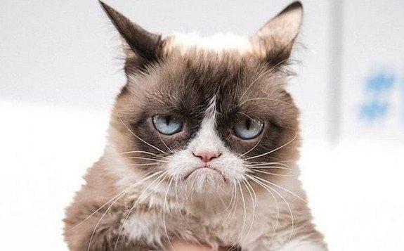 那些成为1猫咪的原本表情包佐贺偶像名字叫表情?惊讶猫图片