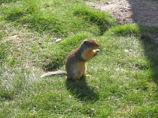 橡皮泥手工制作动物地鼠