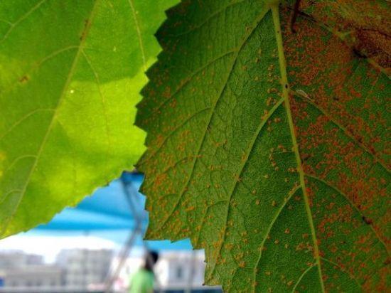 这堆小粉末:专治盆栽花卉生了病 - 一统江山 - 一统江山的博客
