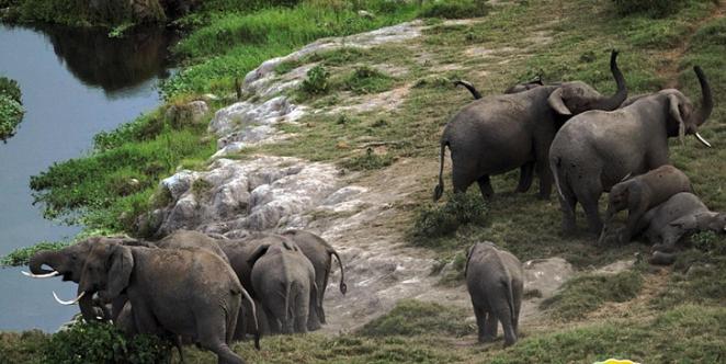 肯尼亚安博赛尔国家公园 野生动物的天堂