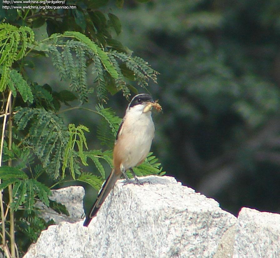 壁纸 动物 鸟 鸟类 雀 896_824