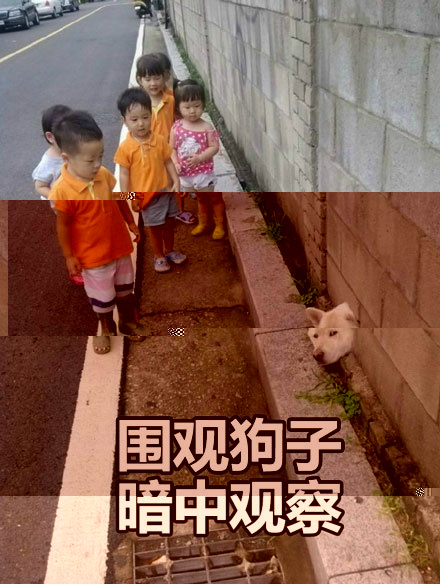 狗狗暗中观察表情包