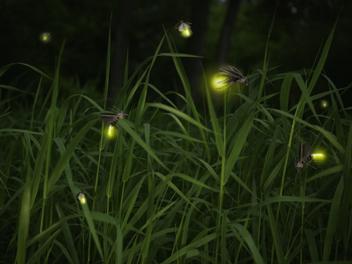 萤火虫为什么会发光